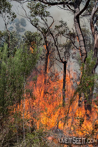 Davidson Hazard Reduction Burn