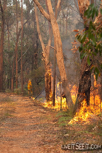 A crew member extends the edge of the burn along the fire trail.