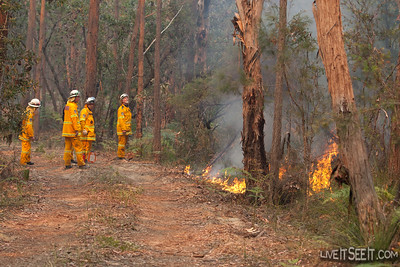 Crews ingnite scrub along a fire trail to continue the HR burning operation.