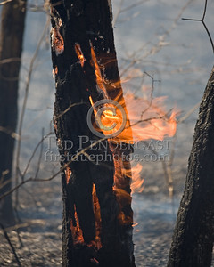 Lexington MA - Belmont Firefighters Operating at Major Brush Fire in The Great Meadows off Circle Rd