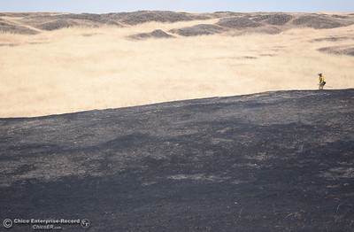 A lone Firefighter is seen along a ridge top between the burn as crews work on a 91 acre fire along Nelson Road in Oroville, Calif. Tues. June 6, 2017. (Bill Husa -- Enterprise-Record)