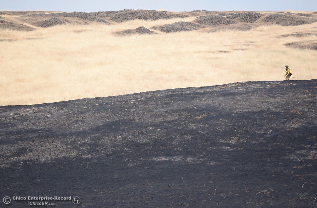 . A lone Firefighter is seen along a ridge top between the burn as crews work on a 91 acre fire along Nelson Road in Oroville, Calif. Tues. June 6, 2017. (Bill Husa -- Enterprise-Record)