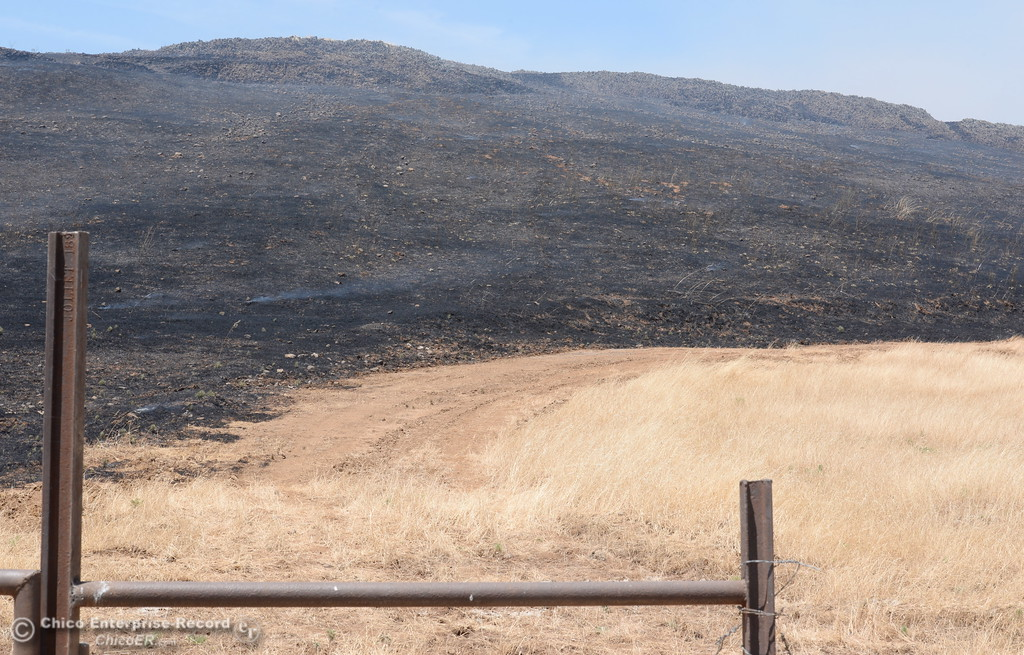 . A grass fire of approximately 91 acres seen along Nelson Road in Oroville, Calif. Tues. June 6, 2017. (Bill Husa -- Enterprise-Record)
