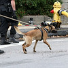 A State Police K-9 shows up to the standoff and blaze at 8 Eden Glen Street in Leominster on Monday, Oct. 16, 2017. SENTINEL & ENTERPRISE / JOHN LOVE