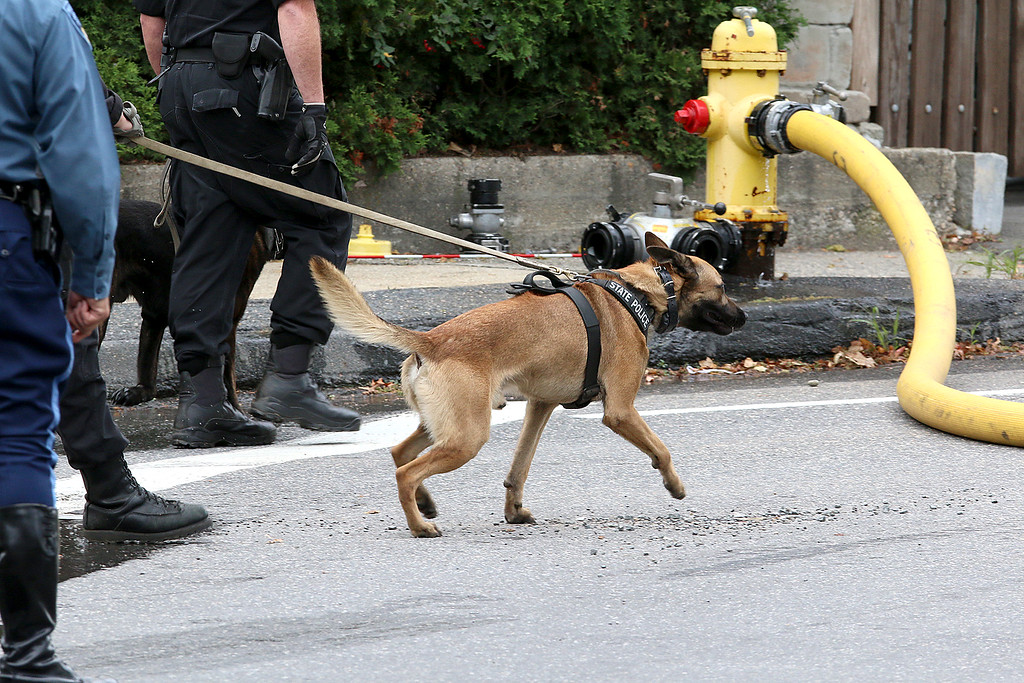 . A State Police K-9 shows up to the standoff and blaze at 8 Eden Glen Street in Leominster on Monday, Oct. 16, 2017. SENTINEL & ENTERPRISE / JOHN LOVE