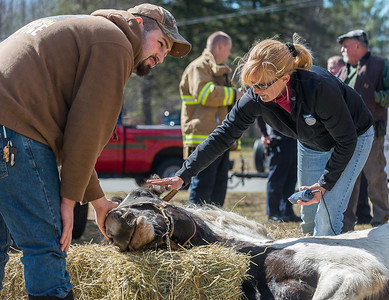 At right, Dr Laura Spengler DVM of Stonewall Equine calms Rosie the horse who fell in her barn at Lazy Day Farm in Rutland, Mass. At left is Rutland firefighter Jesse Klayman, a friend of the owners of the horse. © Jim Marabello