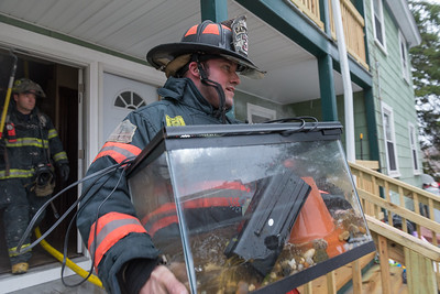 Captain Anthony Marrama retrieves a turtle for a resident from a working fire on Princeton Rd.