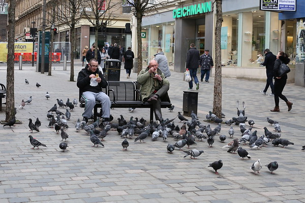 Pigeons always fancy a Greggs