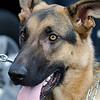 UW Canine unit fundraiser