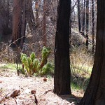 forest-recovery-project's photo