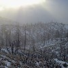 Forest Recovery Project, Images of the Angeles National Forest in the wake of the Station Fire of 2009
