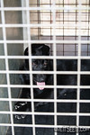 NSW Police Dog Squad