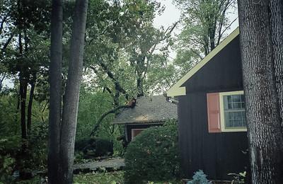 Ed Burger's Tree