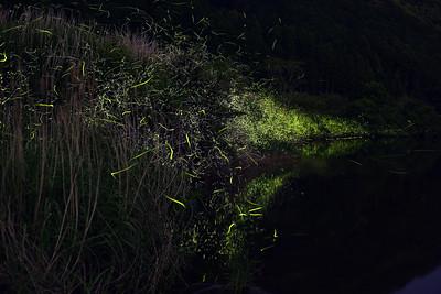 Firefly-028