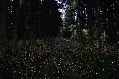 Firefly-044