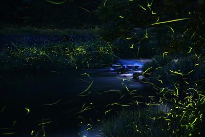 Firefly-029