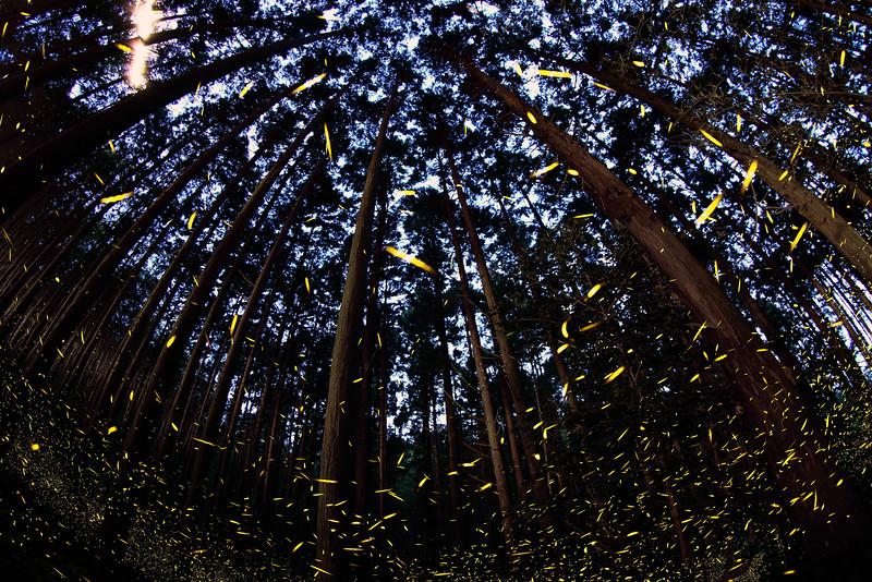 Firefly-041