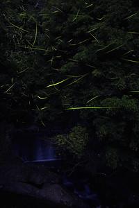 Firefly-032