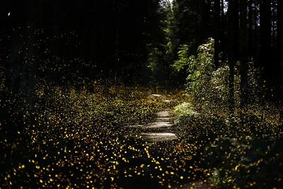 Firefly-039