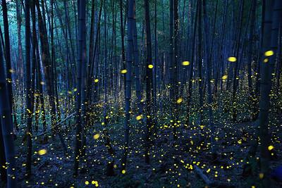 Firefly-043