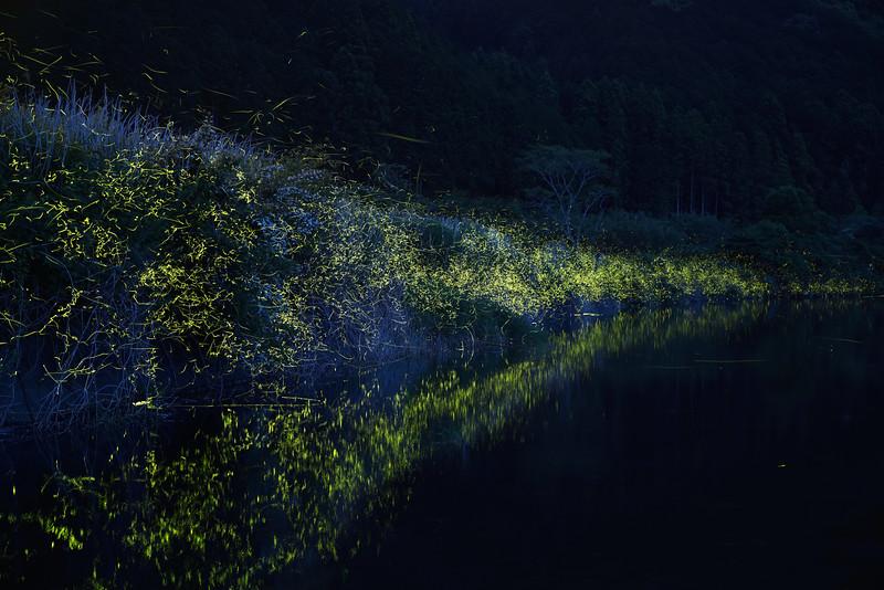 Firefly-050