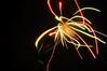 fireworks 2011-5077