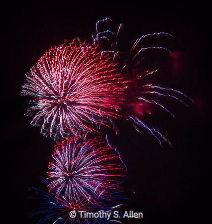 July 4th Celebration: Red, White and Squirrely White