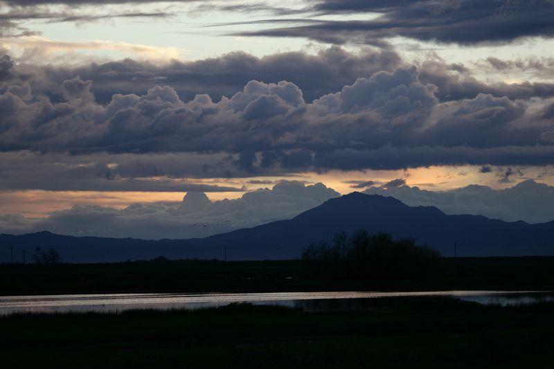 Mt Diablo from Woodbridge w flock birds
