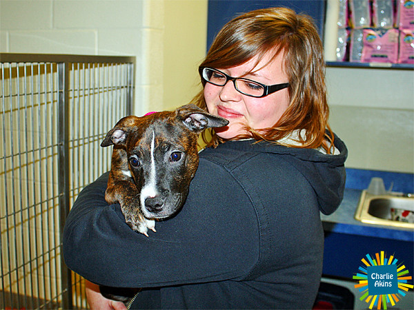 Sweet pups at the Lynchburg Humane Society