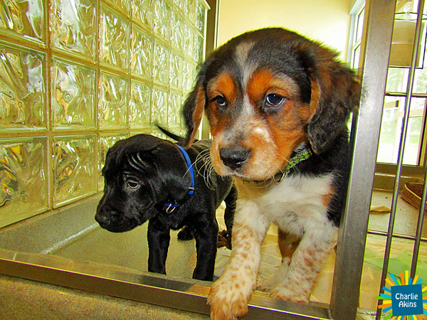 These pups just woke up from their naps.