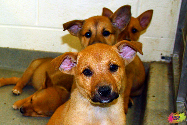 Look at these sweet pups at the Lynchburg Humane Society