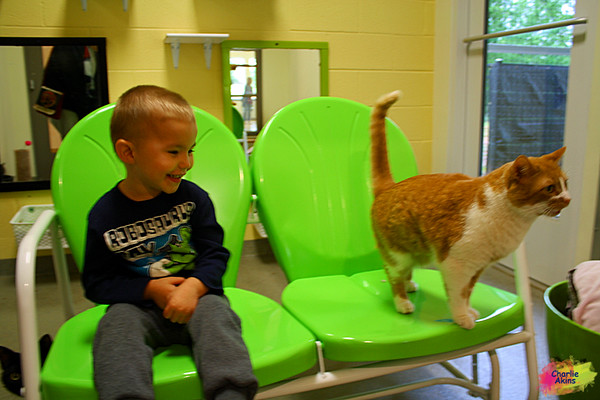 This boy made a new friend at the Lynchburg Humane Society