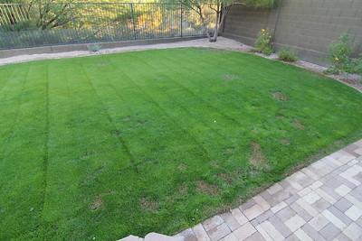 Backyard 2012