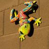 Wall frog.