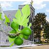 1stmch_Fig-Branch
