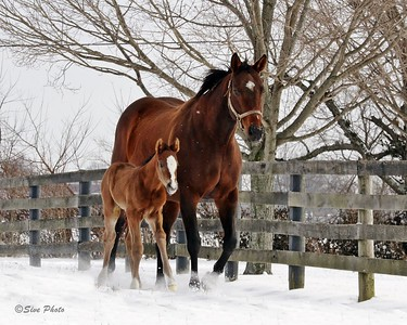 First foal of 2018