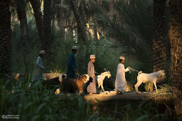 Saroor Market- Oman