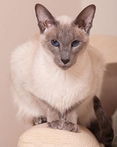 cats0177