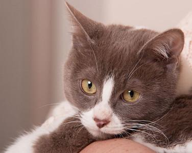 cats0038