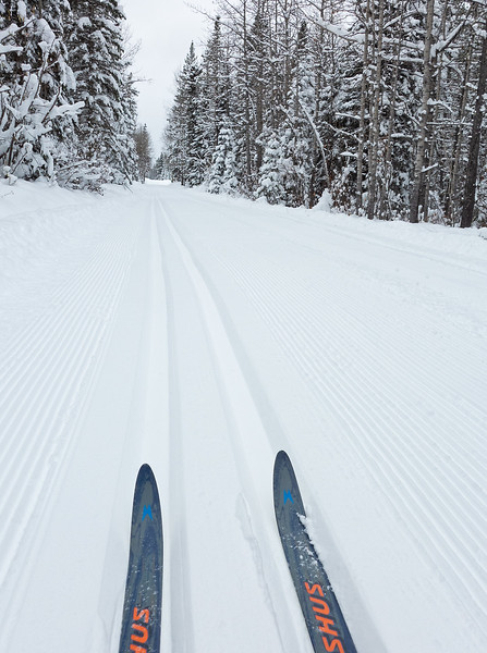 Surprise! Pristine fresh grooming and track setting on East Crystal, and pretty much all the core trails.