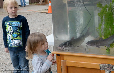 6-year-old Dakota Collins and his 3-year-old sister Kaylynn of Corning check out some of the fish on display in fishtanks Friday. More than 7,000 lbs. of catfish were planted in Horseshoe Lake ranging is size from 1 lb. to 10 lbs. for the 29th annual Hooked on Fishing Not on Drugs event which starts Saturday at 7:00 a.m. at Upper Bidwell Park in Chico, Calif.  (Bill Husa -- Enterprise-Record)