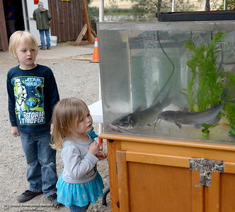 more than 7,000 lbs. of catfish planted in Horseshoe Lake for the 29th annual Hooked on Fishing Not on Drugs event which starts Saturday at 7:00 a.m. at Upper Bidwell Park in Chico, Calif.  (Bill Husa -- Enterprise-Record)