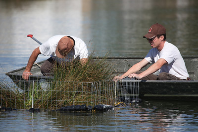 Aquatic biologist Chris Penne directs the placement of floating islands at Meadow Park Pond in Roy. The floating islands are designed to provide hiding cover for fish. Please credit Phil Douglass, Utah Division of Wildlife Resources.