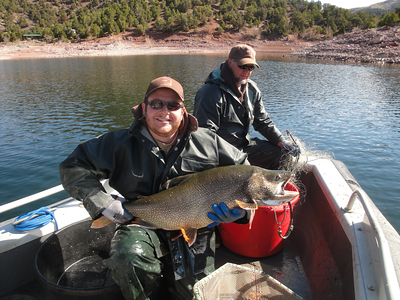 Flaming Gorge project technician Ben Carswell holding a 32-pound lake trout during a gill netting survey. Photo taken May, 2013.