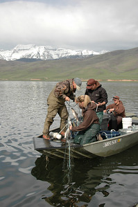 Pulling gillnets at Deer Creek Reservoir on May 5, 2009.  Photo by Ray Schelble