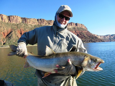 Flaming Gorge lake trout