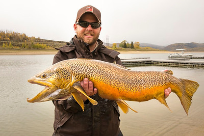 A tiger trout caught during a gillnetting survey at Scofield Reservoir in October, 2013. Photo by Michael Christensen, Utah Division of Wildlife Resources.