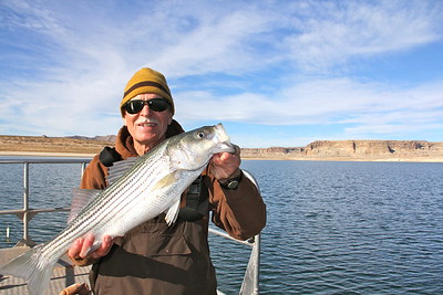 Striper at Lake Powell