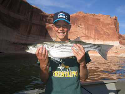 Bo Wilson (12) from Payson shows his striped bass caught on 5-12-06 from Lake Powell.  By Utah Division of Wildlife Resources.