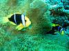 CRay-Fish-3158